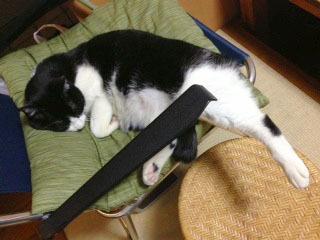 猫足仰角 足を出して寝ている-1.jpg