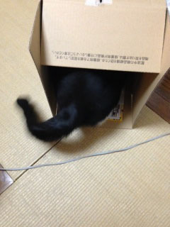 箱 入った-1.jpg