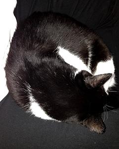 黒白の猫と黒白の人間 03 フラッシュ!.jpg