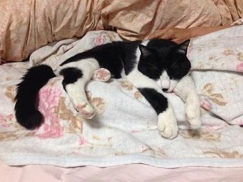 350母の膝カウチにはまる猫1.jpg