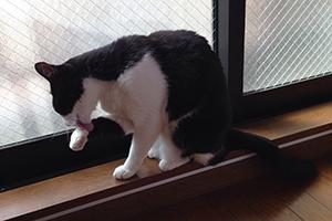 いたずら猫が洗濯物の隙間から 04 毛づくろい.jpg