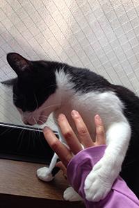 いたずら猫が洗濯物の隙間から 09 しつこい.jpg