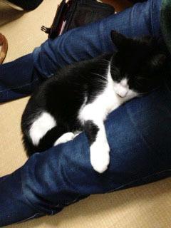 ひっつき猫-1.jpg