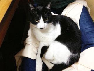 ひっつき猫 膝の上-1.jpg