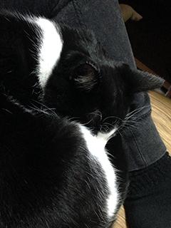 よくわからない猫 001わかる.jpg