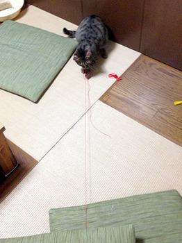 エルちゃんひもあそび 06何度もおしりがぶつかるまで引っ張る.jpg