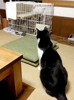 エルちゃん12日目 41チョビ君が見つめる中.jpg