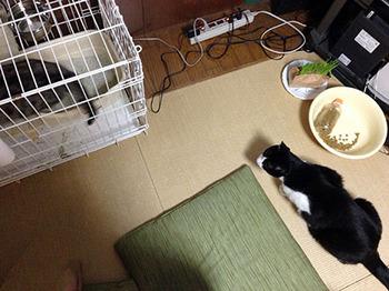 エルちゃん13日目 27二階に上がってしまいました.jpg