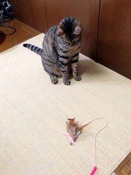 エルちゃん15日目 02このおもちゃがお気に入り.jpg
