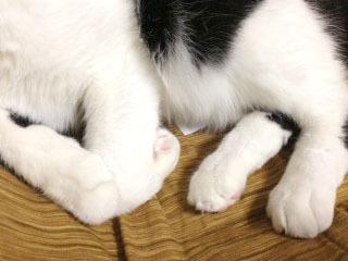 カイロ猫-1.jpg