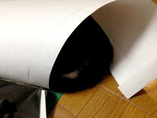 ドレスの邪魔猫 型紙からお尻が見えている-1.jpg