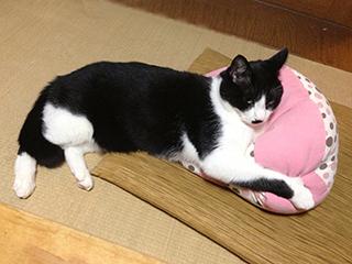 ビーズクッションを抱える猫.jpg