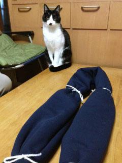 参加型の猫 ちんまり-1.jpg
