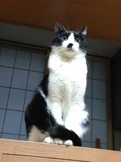 外の音が恐い猫 前を見る.JPG