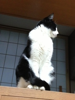 外の音が恐い猫 窓を見る.JPG