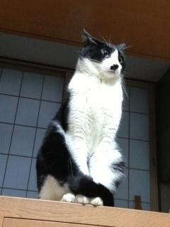 外の音が恐い猫 耳を伏せる.JPG