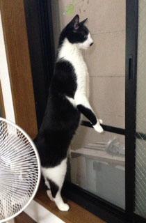 外猫発見 つま先立ち.jpeg