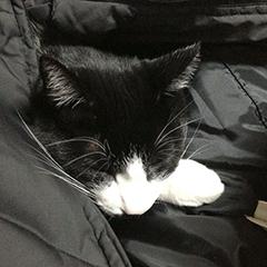 寒い日の猫 01 1回目 ダウンジャケット.jpg