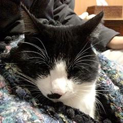 寒い日の猫 07 5回目 ひざ掛け また寝ている.jpg