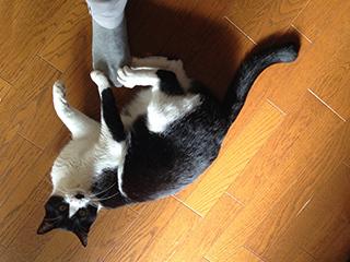 居座る猫07 ケリケリ攻撃しながらにらむ.jpg