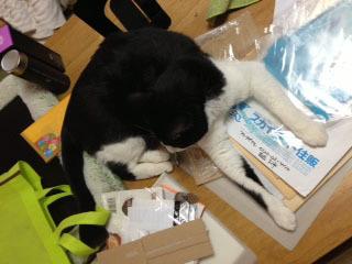 掃除を訝しむ猫 これは一体何だ-1.jpg