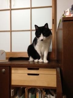 掃除を訝しむ猫 怪しいもの発見.JPG