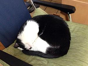 掃除機を怖がらない猫 01 気持ちよく寝ていたら.jpg
