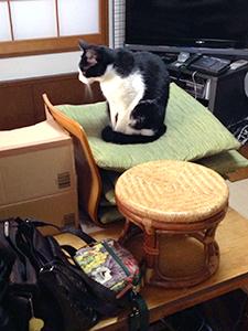掃除機を怖がらない猫 06 荷物といっしょに積まれてます.jpg