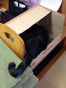 掃除機を怖がらない猫 08 爪をといでました.jpg