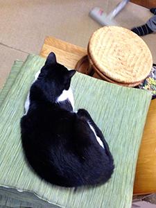 掃除機を怖がらない猫 13 掃除見物.jpg