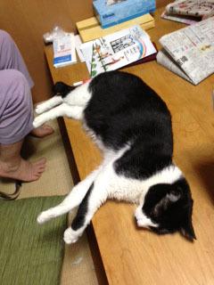 新聞の邪魔B 1 最初は普通に寝てたんです-1.jpg