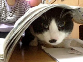 新聞下に潜入する猫 2 こんなところに潜ってる-1.jpg