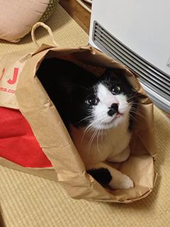 猫がにっこり.jpg