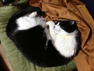 猫がぬくぬく寝ている.JPG
