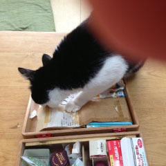 猫に荒らされた救急箱 証拠写真-1.jpg