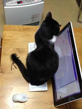 猫のベストポジション メガネバンバン.jpg