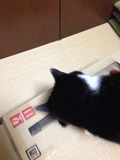 猫のモグラたたき120そこじゃないでしょう.jpg