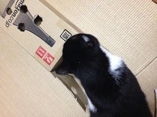 猫のモグラたたき200しばしたたずむ.jpg