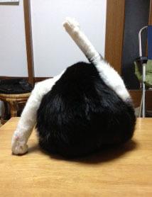 猫の不思議な後ろ姿 ?-1.jpg