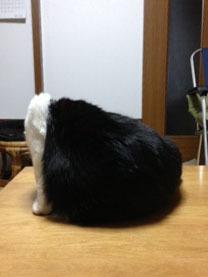 猫の不思議な後ろ姿 ??-1.jpg
