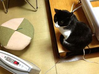 猫ポジション 3-1.jpg