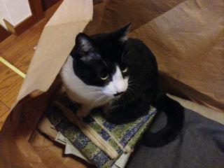 猫検品 異常なし-1.jpg
