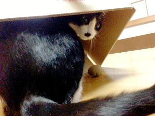 猫箱 それはチョビ君を閉じ込めていたからです-1.jpg