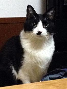 真面目な顔の猫.jpg
