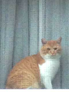 窓の猫01.jpg