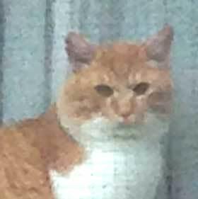 窓の猫02.jpg