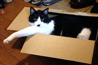 箱猫 睨まれた.jpg