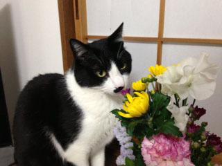 花と猫の三角帽子 2バストショット-1.jpg