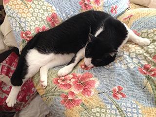 花模様の布団 猫が落ちそうな格好で寝ている.jpg