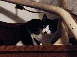 遊んで顔の猫 01 階段の途中.jpg